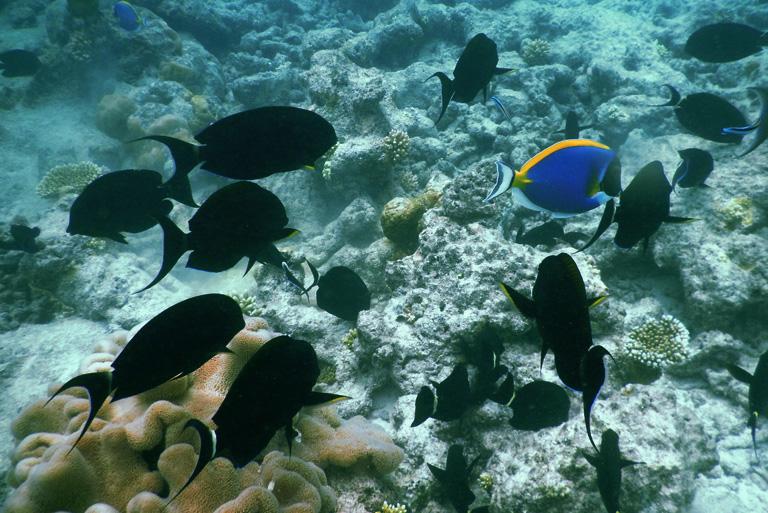 maldives_marine